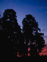 Лесовье_10