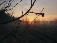 Лесовье_1